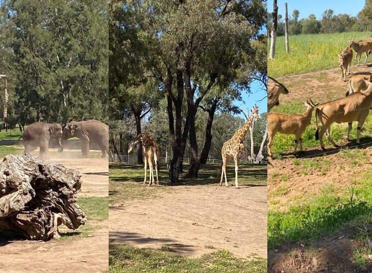 dubbo-zoo-animals