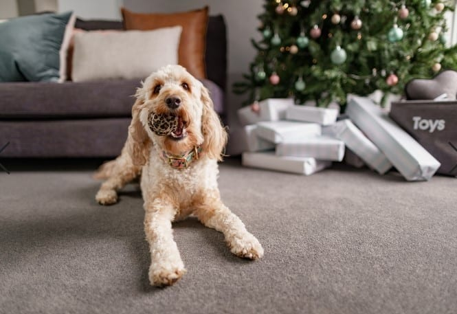 The Deadly Danger Of Christmas For Our Pets
