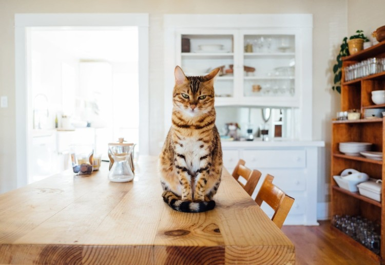 The Ultimate Guide To Renovating With Cats
