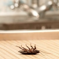 Stop Ignoring the Signs of Pests - You May Have an Infestation in Your Home