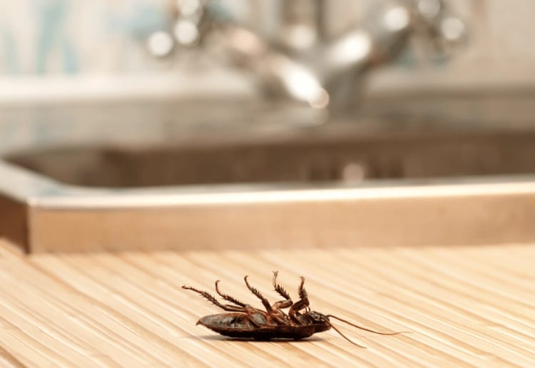 Stop Ignoring the Signs of Pests – You May Have an Infestation in Your Home